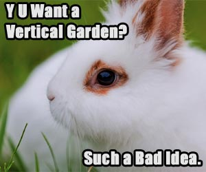 Rabbit saying don't get a vertical garden