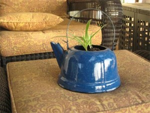 spider plant in tea pot