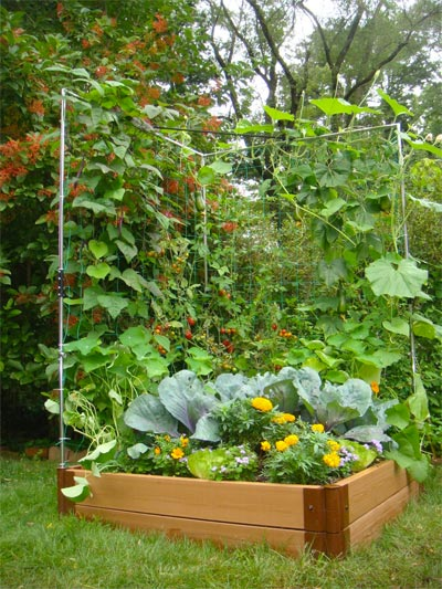 How To Make A Vertical Tomato Garden