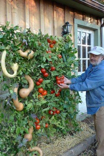 Attrayant Vertical Garden Kits