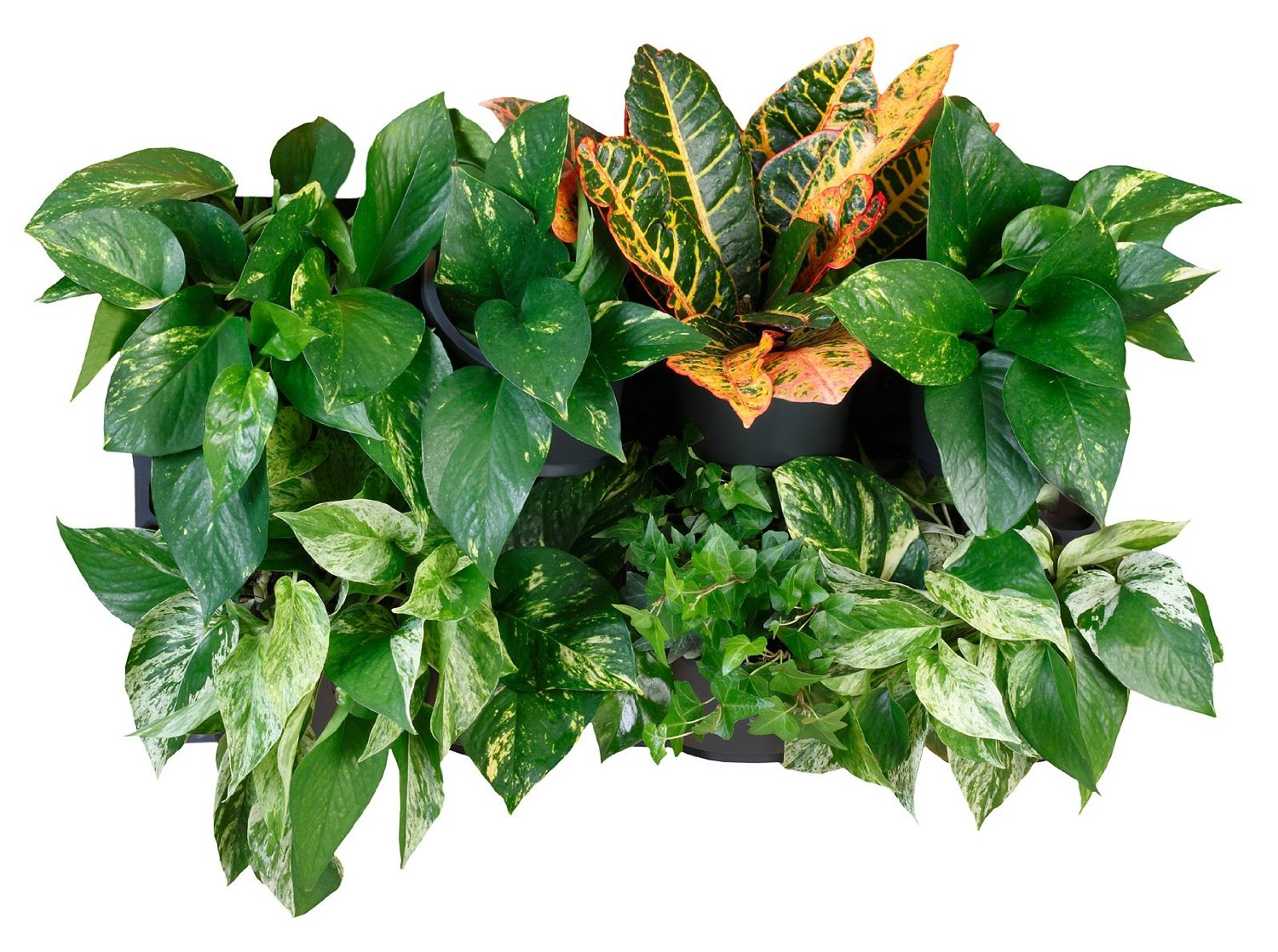 60 Vertical Garden Kit With Built In Irrigation