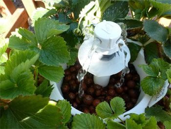 Hydroponics Automatic Watering System