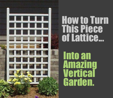 DIY Lattice Planter: How to Turn a Piece of Lattice into an Amazing Vertical Garden