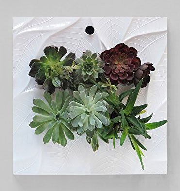 Indoor Living Wall Planter with Succulents